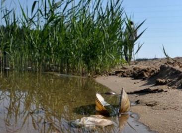 Rekomenduojama vengti maudymosi pirmajame Varėnos tvenkinyje (Varėnos jūroje)