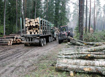 Reidų metu bus tikrinama, ar medienos vežėjai turi leidimus